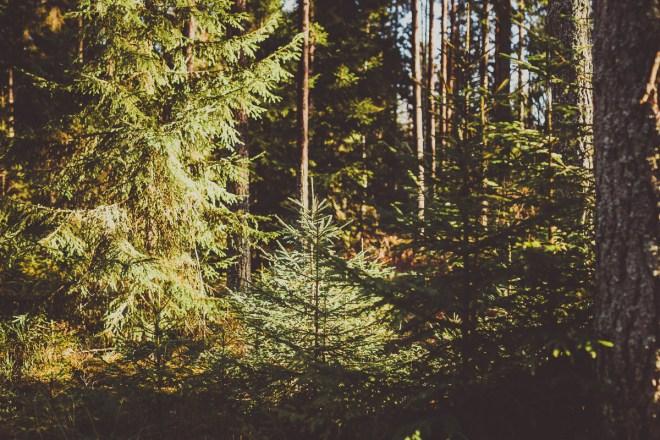 tivedens_nationalpark-17