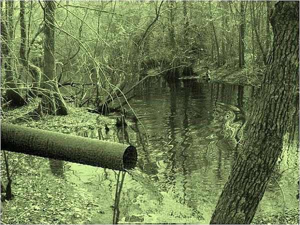 A toxic swamp, yesterday