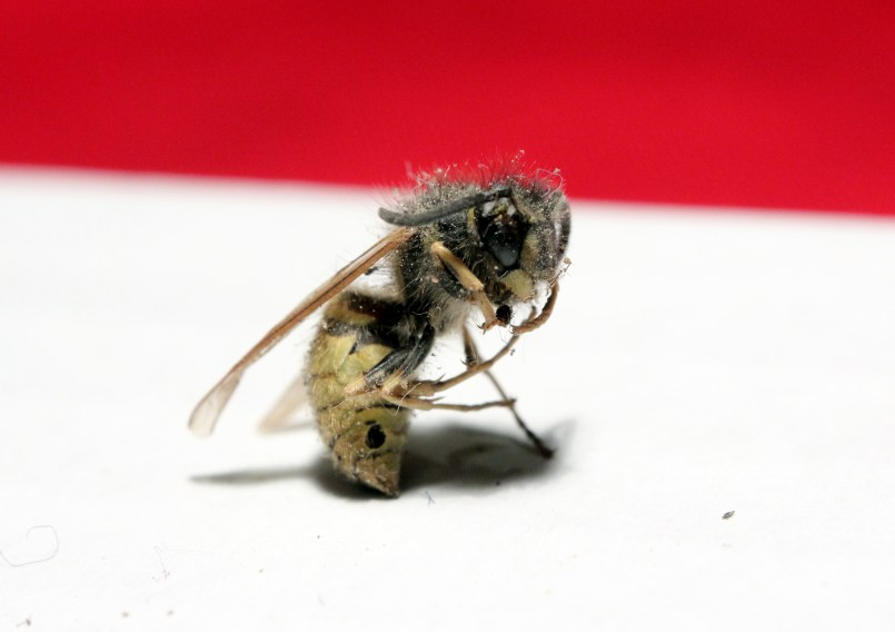 "Wasp - this one adopted this stranger pose when I dumped him out of the box. I made me think of Rodin's ""Thinker""..."