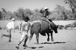 Bull riding clowns and rider