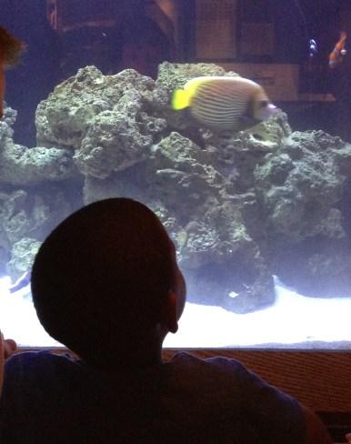 CJ admiring the fish