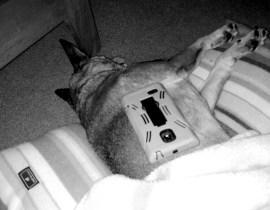 Ari makes a nice phone resting spot