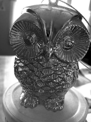 bw owl
