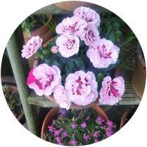 Flowers on Kate Beavis Vintage Home blog