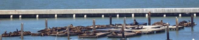 Seals in Fisherman's Wharf