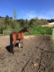 Horse enjoying the sun in an outdoor paddock