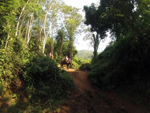 Elephant trekking...