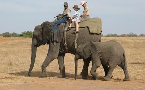 jembisa-elephant-m_2762014k