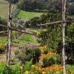 Montalto, Mornington Peninsula, winery