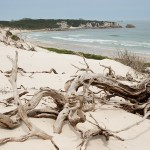 beach, wilderness, Tasmania, driftwood, kate mccombie, photographer, melbourne