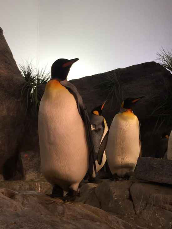 st louis zoo attractions