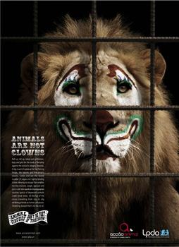 Circus lions – A little lion shows the bigger picture.