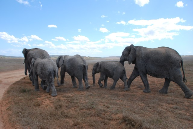 the elephants journey by Kate