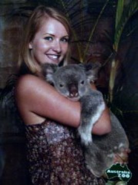 Holding koalas can be upsetting and disruptive for them