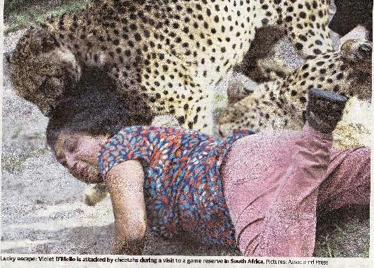 newspaper clipping of a cheetah attack