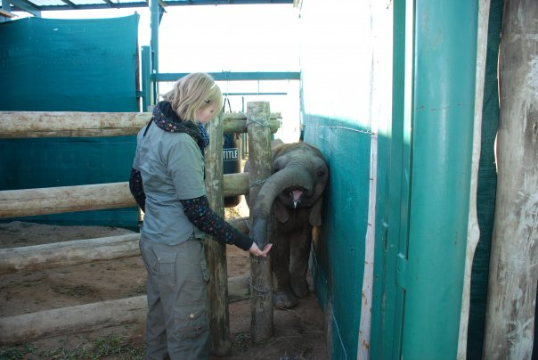 Sometimes human intervention is necessary to save elephants