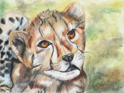 Cheetah art by Kate on Conservation