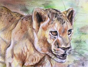 kate on conservation lion cub art