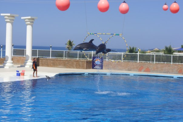 Dolphins in captivity performing