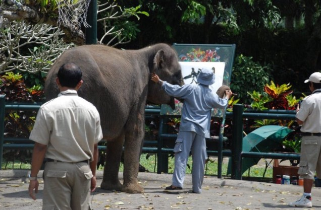 Indian elephant and trainer