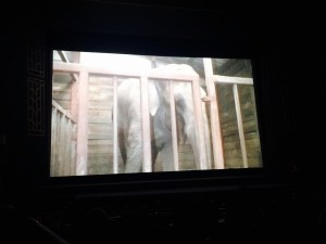 elephant in the room screening