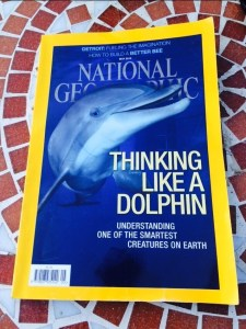 National Geographic Dolphins issue