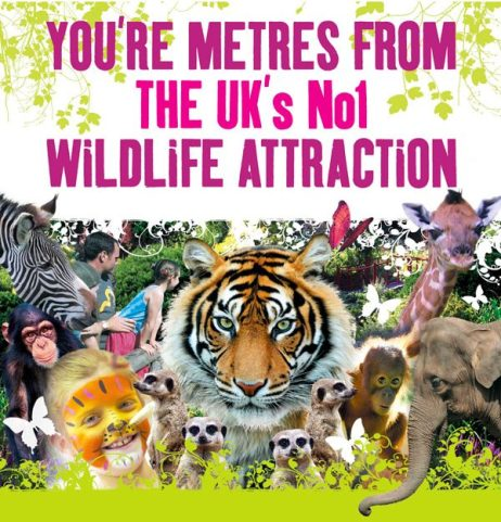 Chester Zoo A3 Poster - UK's no1 Wildlife Attraction