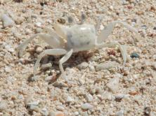 Crab photography by Kate on Conservation