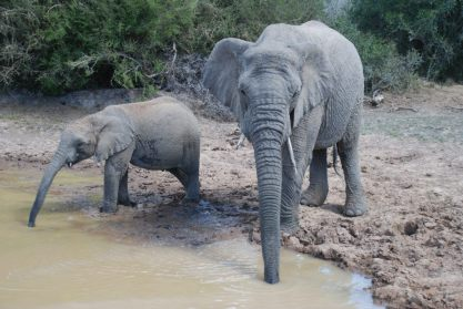 Elephant photography by Kate on Conservation