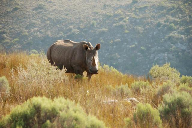 Rhino by Kate on Conservation
