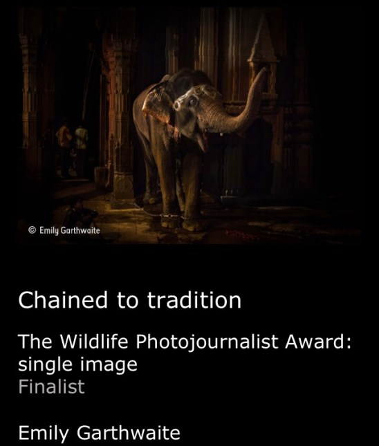 Chained to tradition by Emily Garthwaite