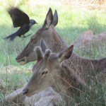 Deer photography by Kate on Conservation