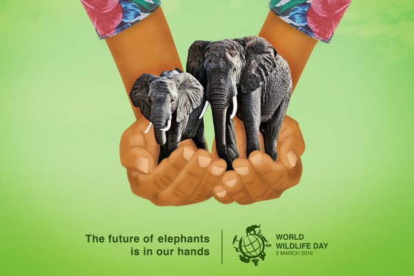 Join me for a unique World Wildlife Day adventure!