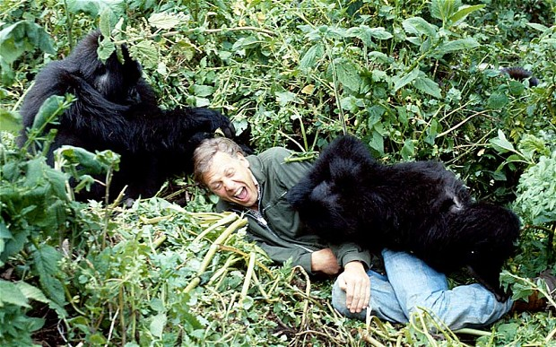 DAVID-ATTENBOROUGH_gorillas