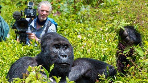 gorilla family and me