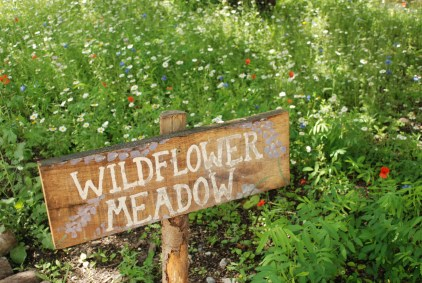 Photography Day Course — Woodberry Wetlands