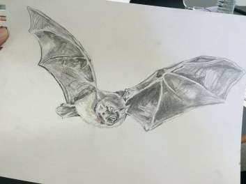Wild life drawing live animals for Batfest