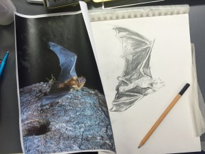 Wild life drawing live animals, Batfest