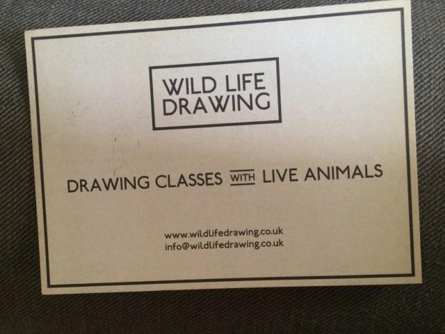 Wild life drawing live animals