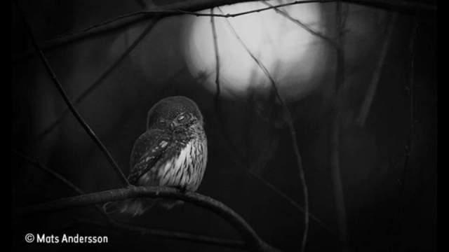 wildlife-photographer-of-the-year-2016