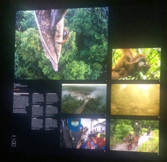 wildlife-photographer-of-the-year-orangutan-photo-essay