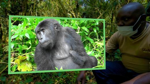In app footage Gorilla Safari VR