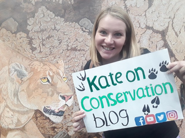 kate on conservation stands with lioness by Omra Sian