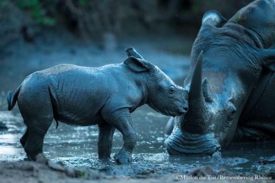 Marlon du Toit Remembering Rhinos