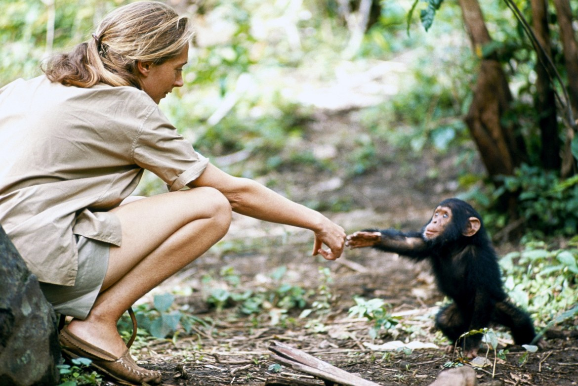 Dr Jane Goodall interview: reflecting on chimps in the image of man