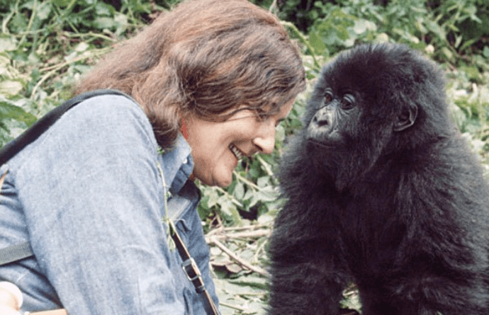 Eco-friendly Christmas gift ideas for him, her and… gorillas!