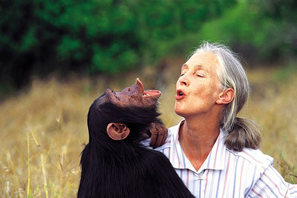 jane goodall with a chimp pant hooting