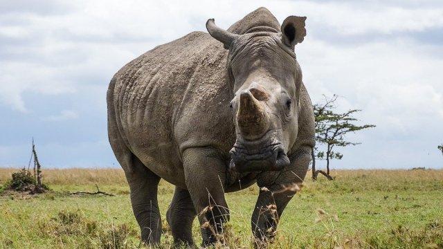 Rhino-in-Kenya