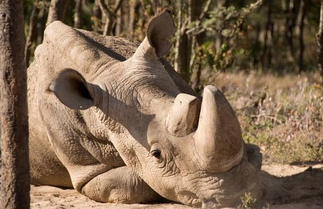 Sudan tribute from Helping Rhinos