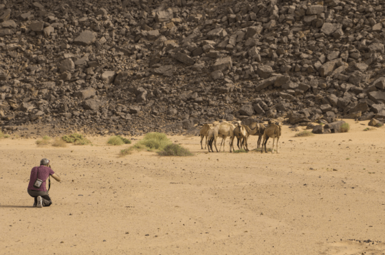 photographing camels